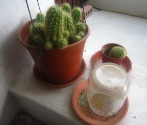 joyfulyue.wordpress.com_cactus