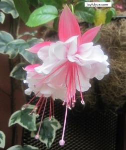 joyfulyue.com_CNY_Gardens